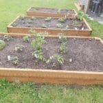 Vegetable Garden Planted at RBAC Office