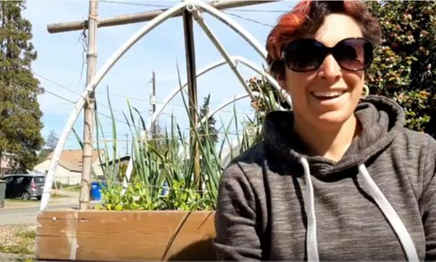Beet Box: Garden Planning 2020