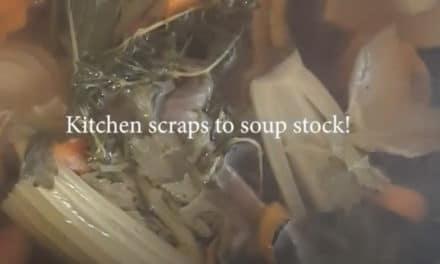 Beet Box: Veggie Scraps!