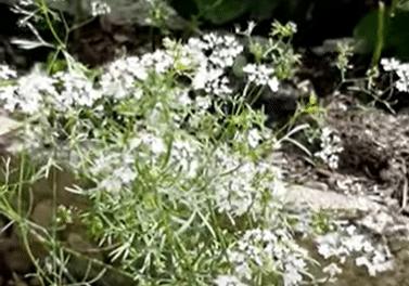 Beet Box: Garden Update